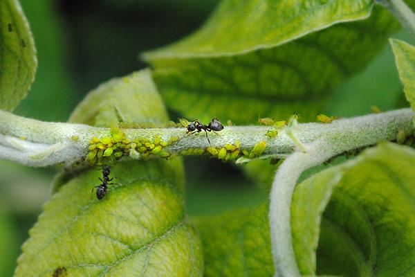 Насекомые. Часть #2. Муравьи, жуки и их паукообразные соседи